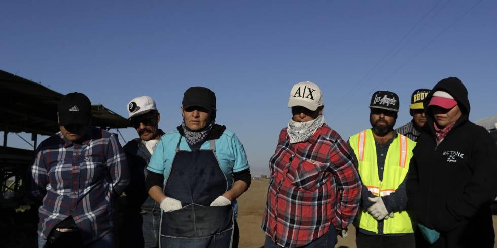Trabajadores del campo en Huron, California, en septiembre.