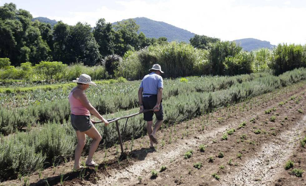 Los jubilados Iría y Jurandir de los Reyes, que siguen trabajando en el campo para complementar la renta familiar.