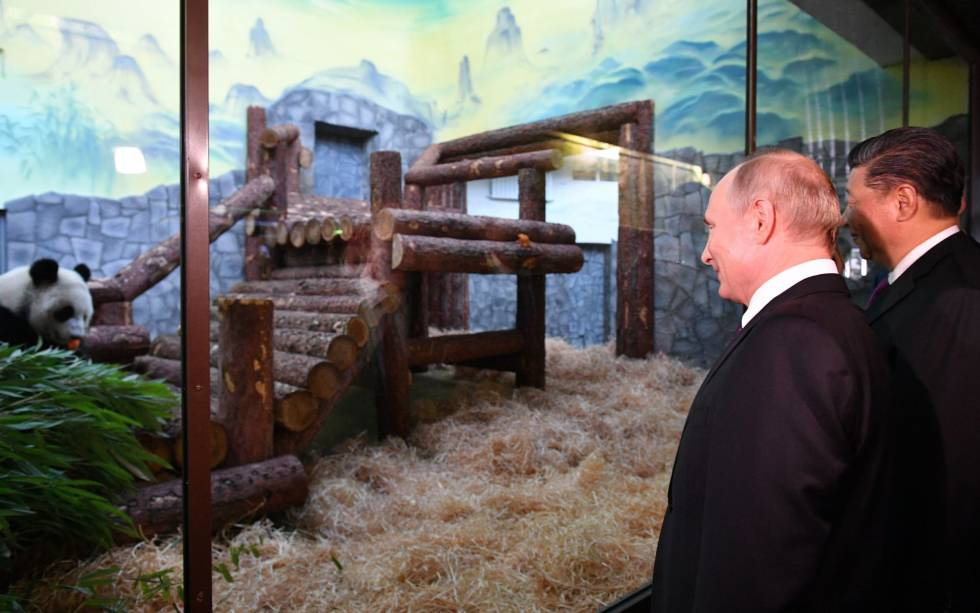 Putin y Xi en el recinto para los dos osos panda que China ha entregado a Rusia, este jueves en Moscú.