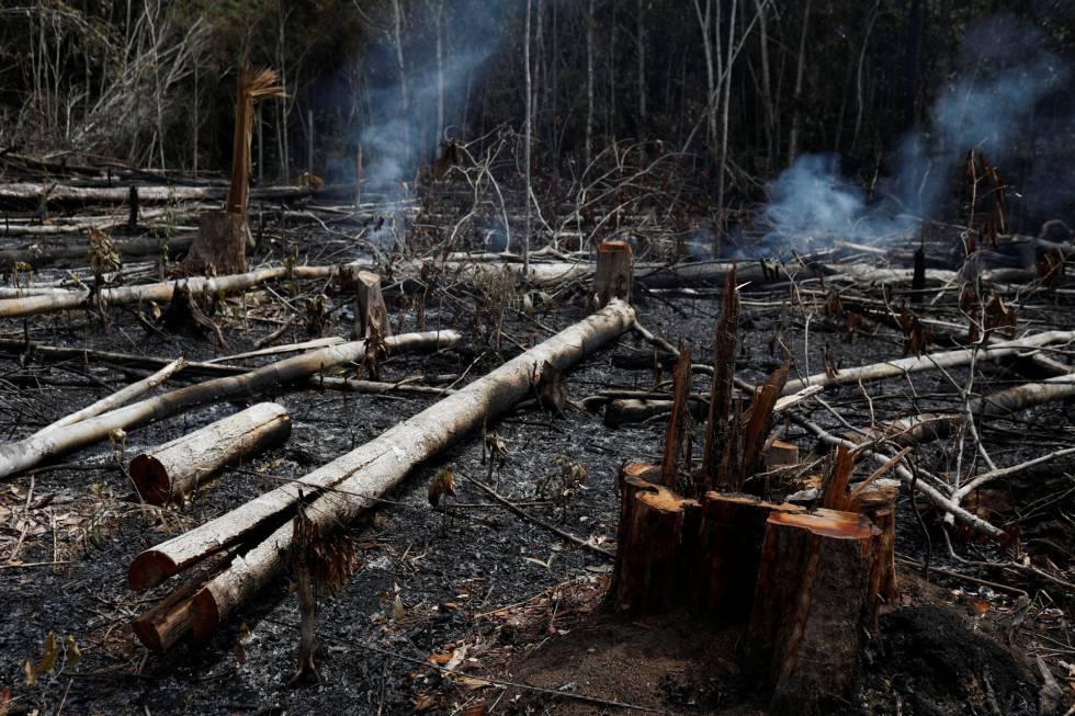 Región de la Amazonia brasileña tras los incendios.