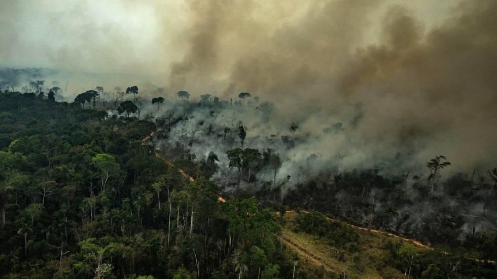 La Amazonia sin ley de Bolsonaro