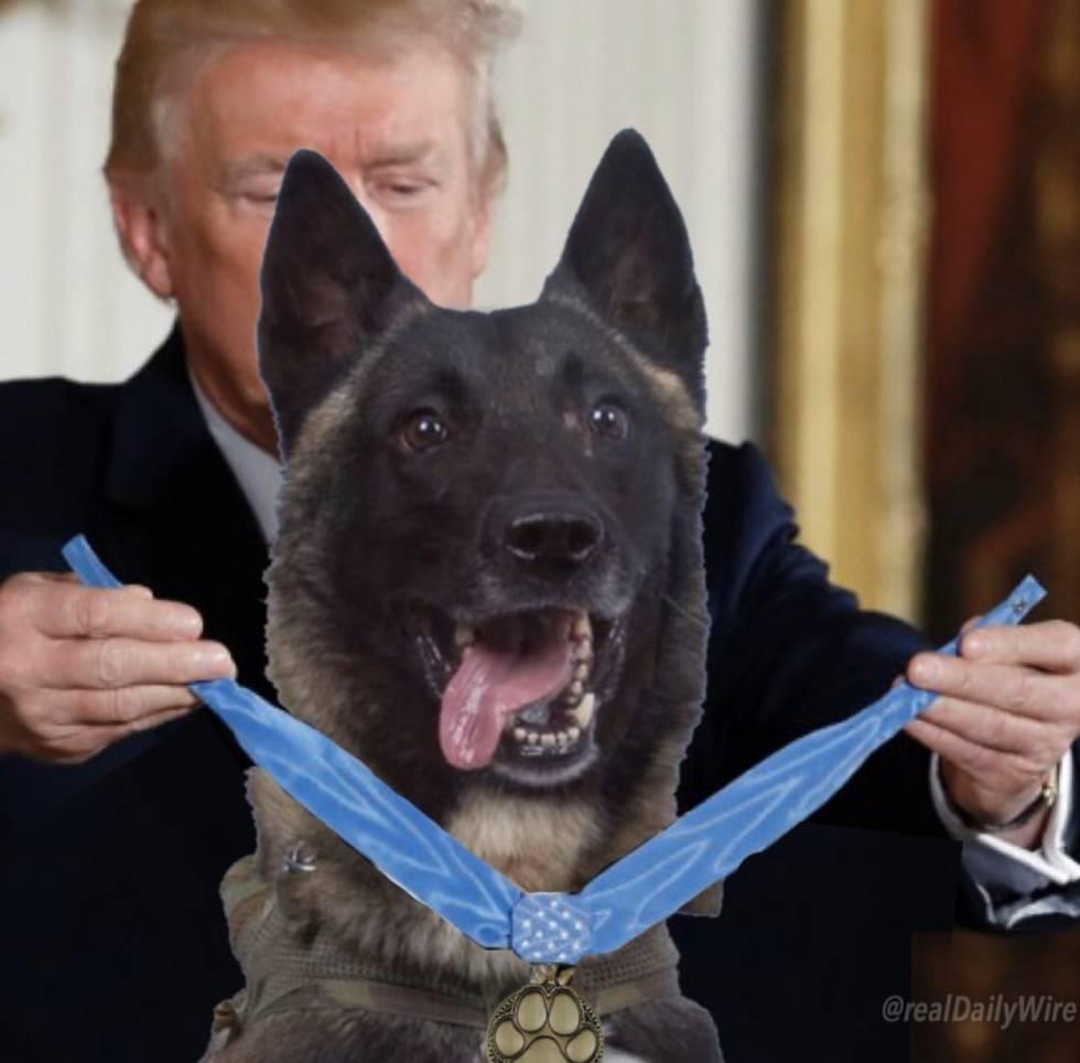 Captura de pantalla de una imagen compartida por Donlad Trump con el perro Conan en su cuenta de Twitter.
