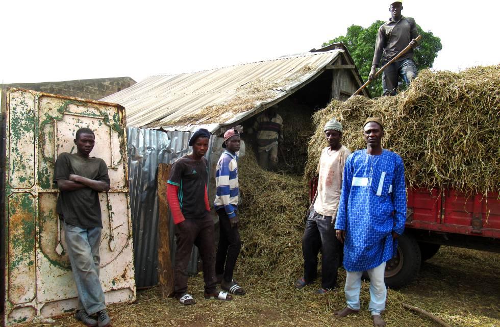 El propietario agrícola Alhagie Njai Manka junto a jóvenes del pueblo Madina Serigne Mass.