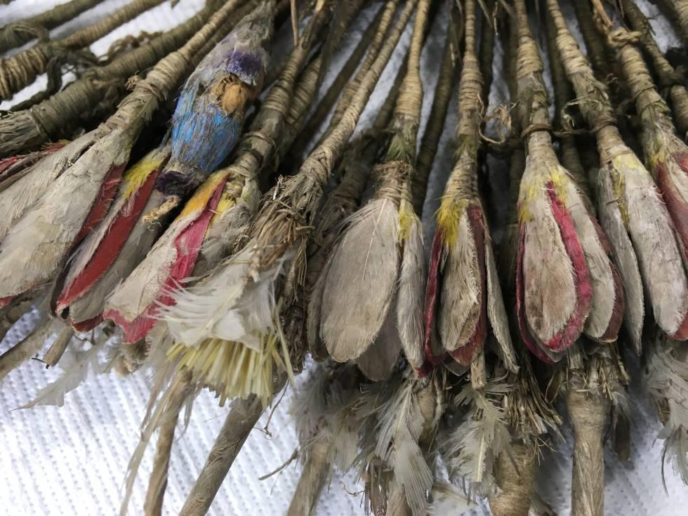 Detalle de las plumas, en una imagen de 2018.