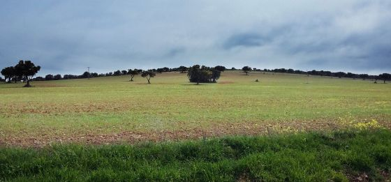 A field between Torrenueva and Torre de Juan Abad (Ciudad Real) where Quantum is searching for rare earth metals.