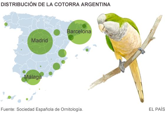 La plaga de cotorras argentinas llega a los 20.000 ejemplares en España