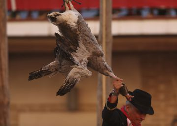 The Toledo town where horse riders rip the heads off dead geese