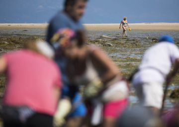 How tourists are making waves for Spain's shellfish harvesters