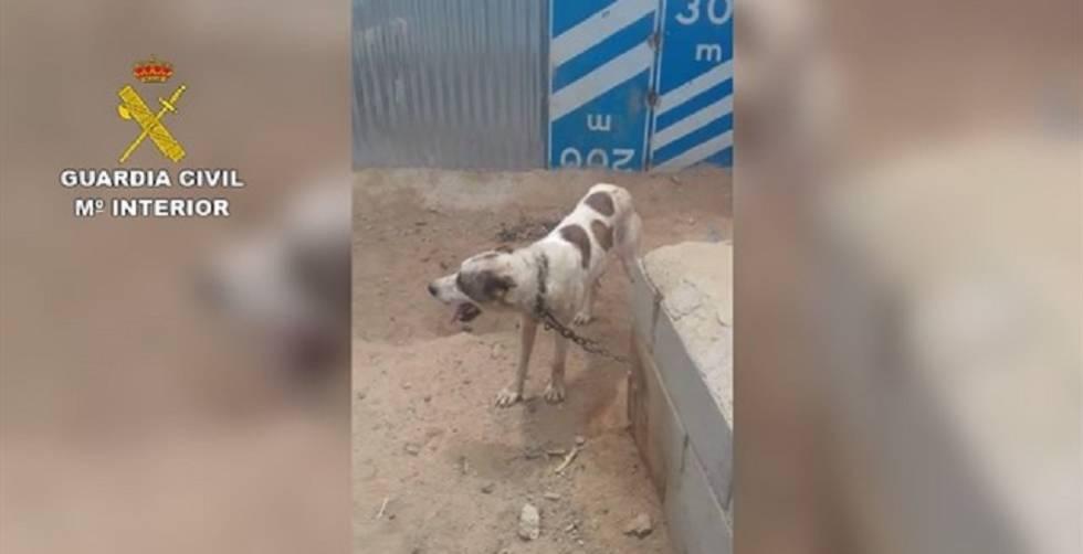 Uno de los animales encontrados en malas condiciones en una finca de Sorbas.