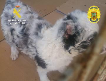 Uno de los perros mutilados en 2016.