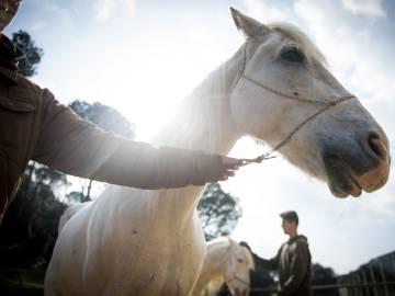 Terapia con caballos en el Centro de Adicciones CITA.