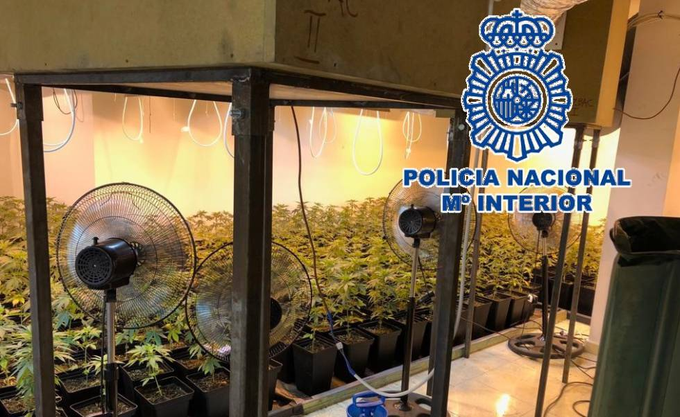 detenidas-36-personas-esta-semana-por-cultivar-marihuana-en-málaga