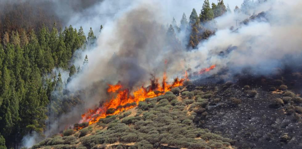 Resultado de imagen de fuego gran canaria
