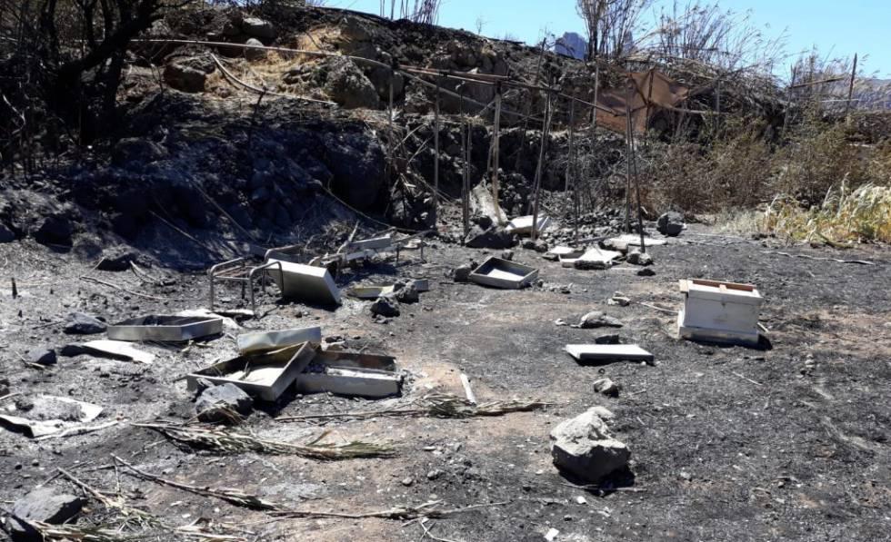 Colmenas destruidas por el fuego en Gran Canaria.