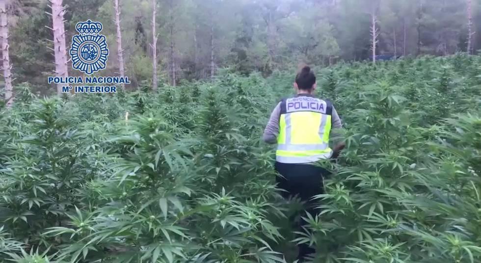 seis-detenidos-y-16-000-plantas-de-marihuana-incautadas-en-aragón