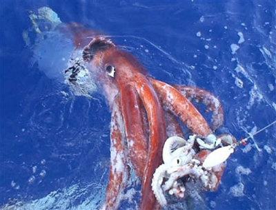 Calamares gigantes versus cachalotes | Sociedad | EL PAÍS