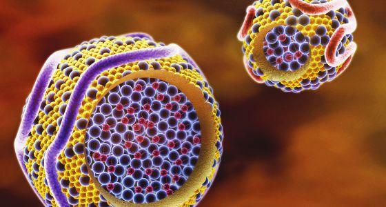 El colesterol bueno reduce la expansión de las células del cáncer
