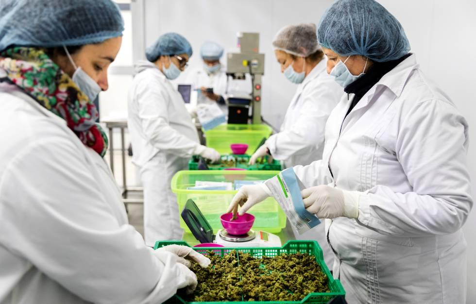 Anatomía de una legalización | Sociedad | EL PAÍS