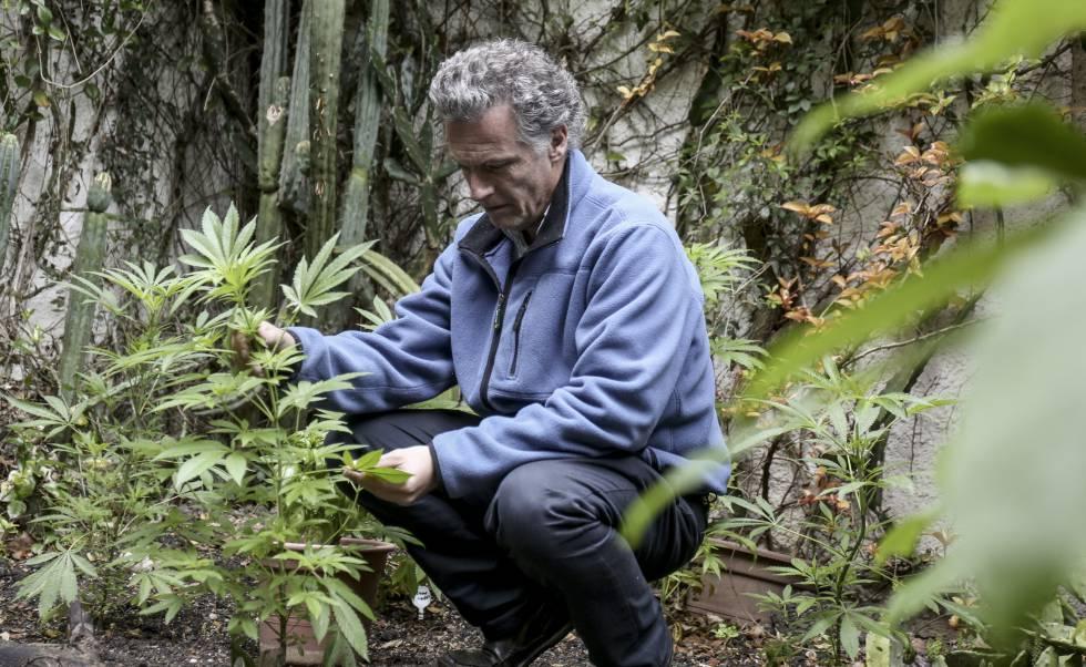 El empresario Eduardo Blasina, en una plantación de marihuana.