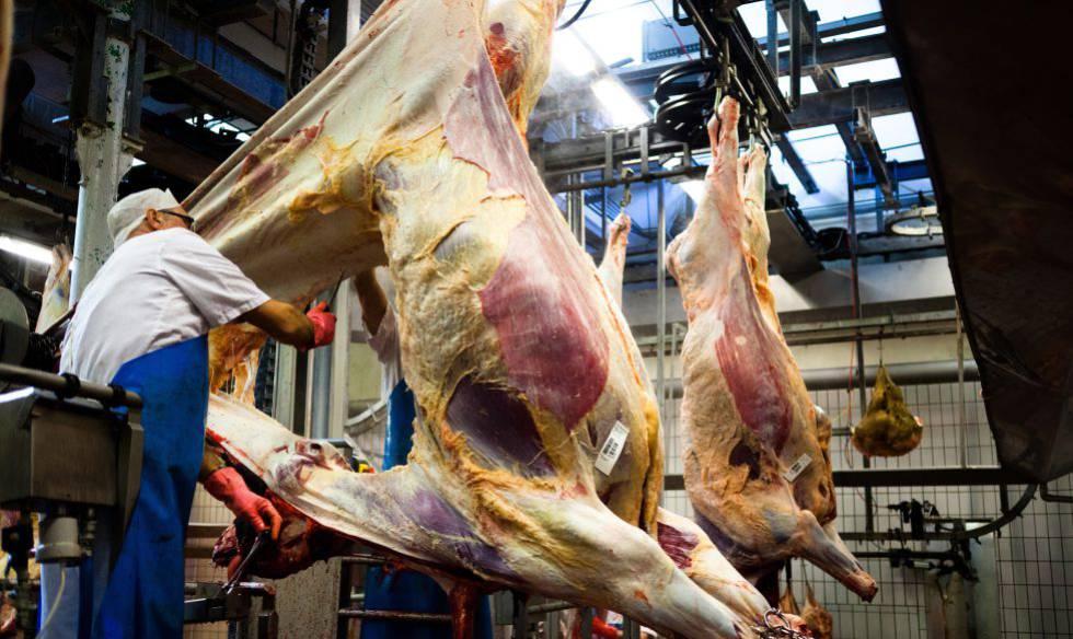 Bélgica proíbe rituais religiosos sobre abate de animais