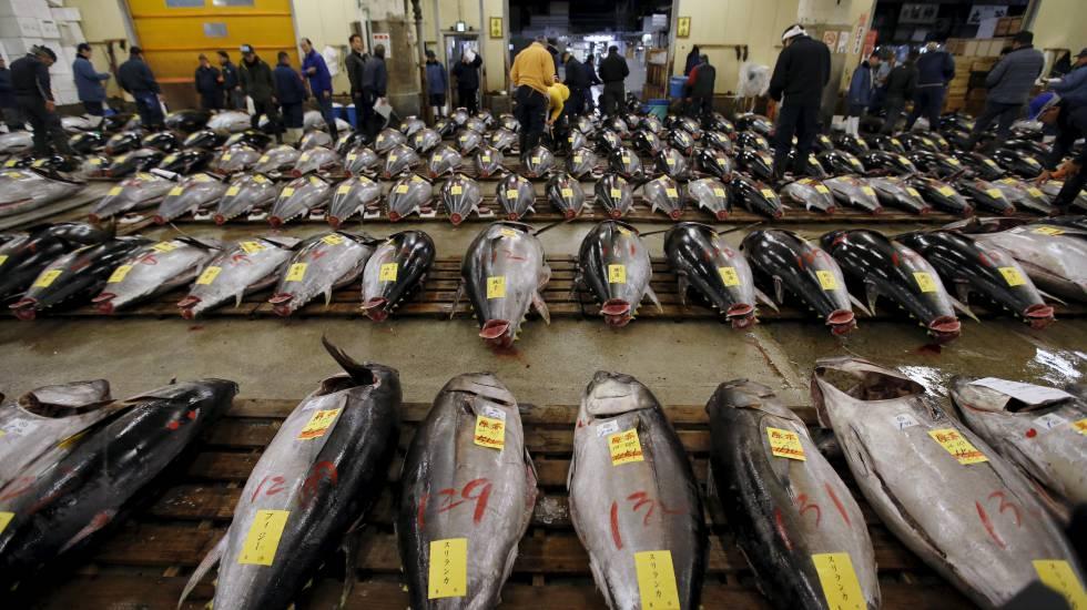 Venta de atún rojo en la lonja de Tokio (Japón). rn