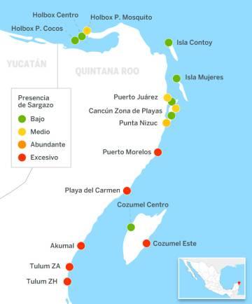 Presencia de sargazo en las costas de la Riviera Maya.