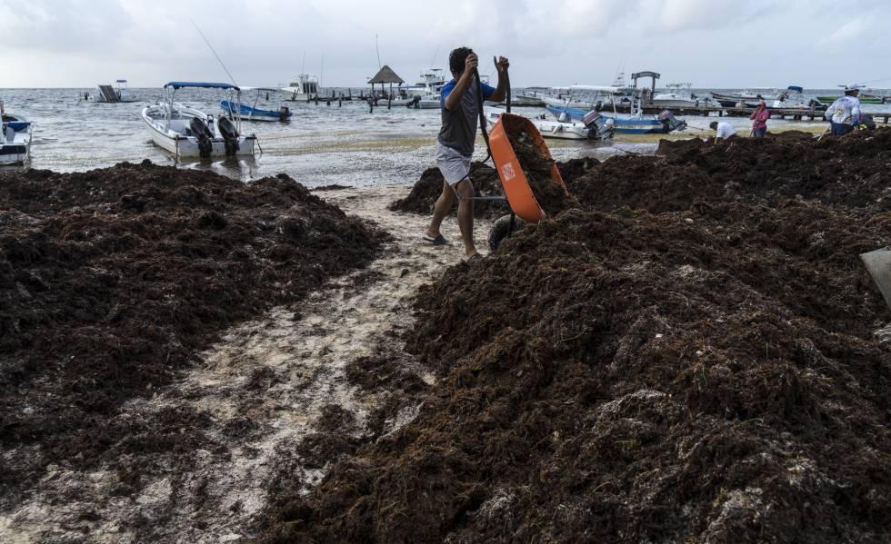 Resultado de imagen para Recolectan 89 toneladas de sargazo en Quintana Roo