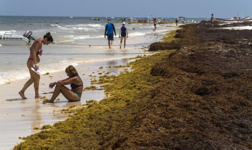 Unas turistas aprovechan el día de playa en Tulum pese a la llegada masiva de algas a las costas del caribe mexicano.