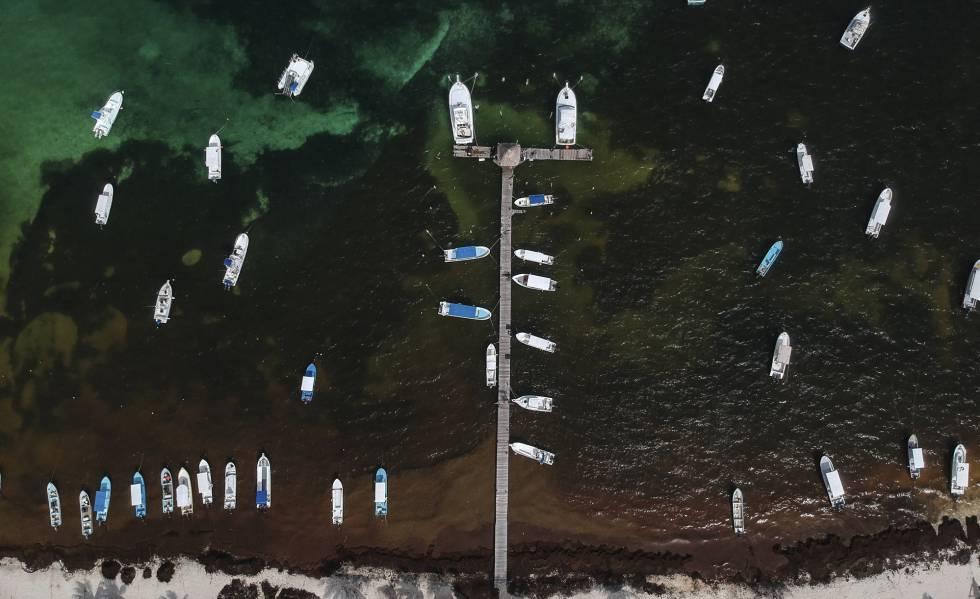 Vista aérea de la concentración de sargazo en un puerto en la costa Quintana Roo.