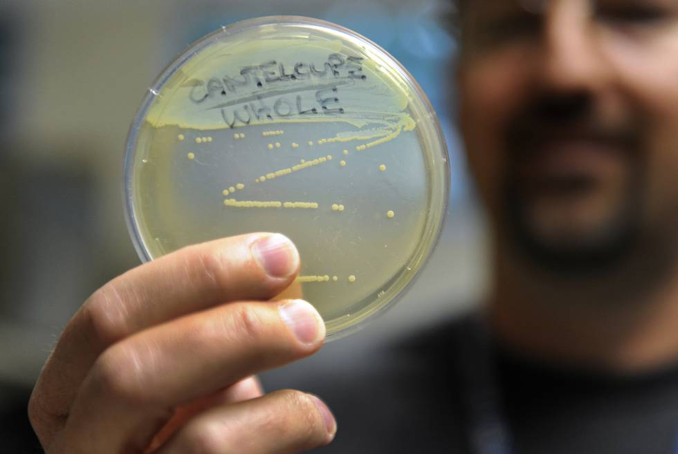 Un empleado del departamento de salud pública de Colorado sostiene una muestra de 'Listeria'.