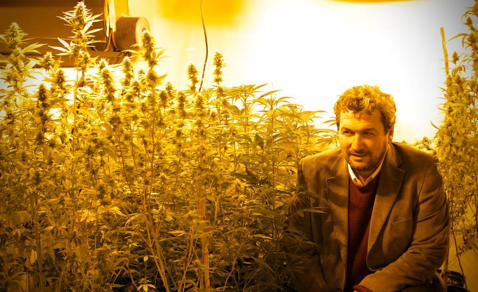 nace-la-primera-semilla-de-cannabis-100-argentina