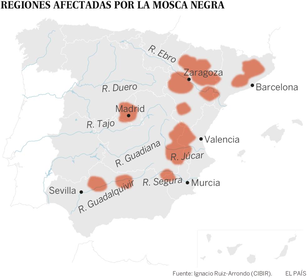 La mosca negra, la plaga que acecha en los ríos españoles