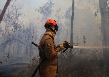 Indústria agropecuária do Brasil se alia a ONGs para exigir que Bolsonaro detenha o desmatamento