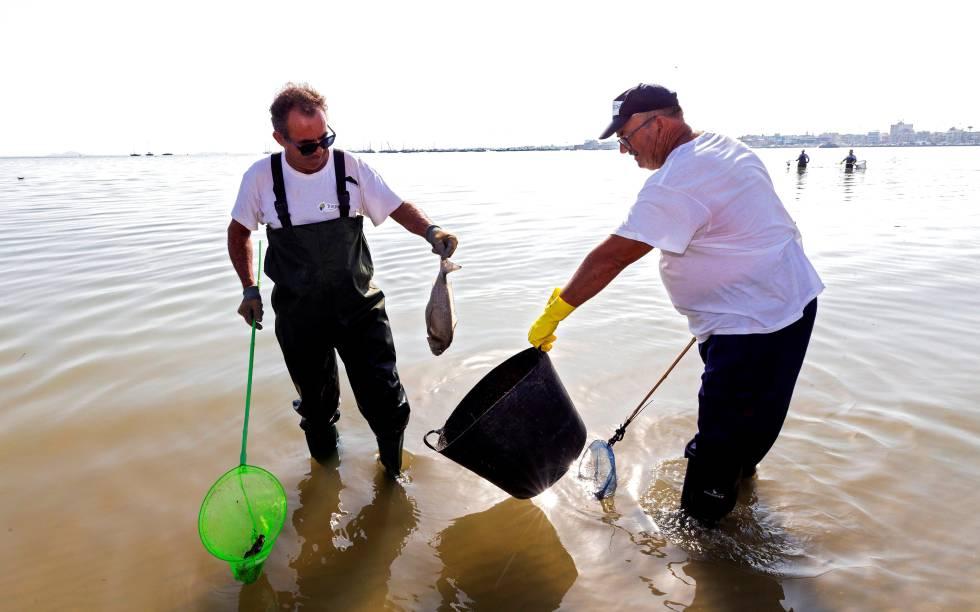 Trabajadores de medio ambiente de la Comunidad de Murcia recogen peces muertos en el Mar Menor en la localidad murciana de San Pedro del Pinatar.  rn rn
