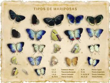 Lepidópteros mostrados en la 'Biología Centrali-Americana', de Frederick DuCane Godman.