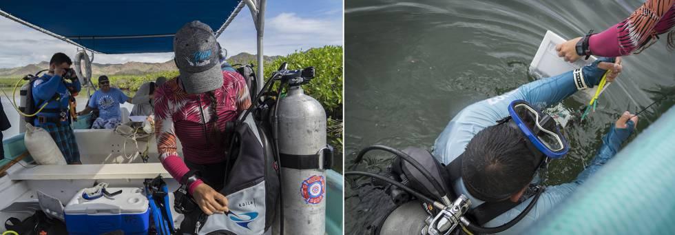 Pescadores capacitados como buzos durante los monitoreos submarinos.