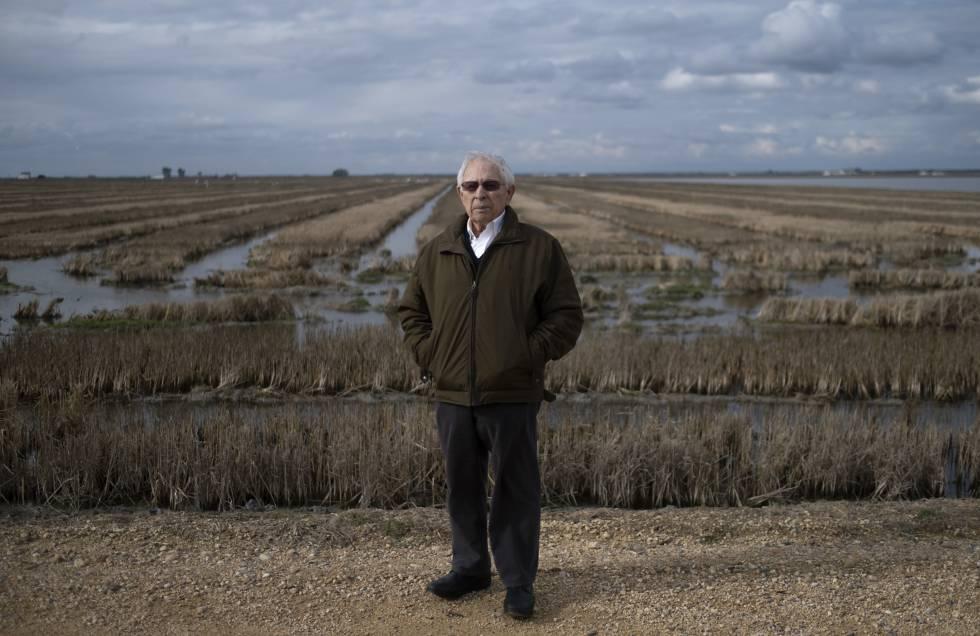 Antonio Olivares, presidente de los regantes del margen derecho del río Guadalquivir con los arrozales.
