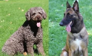 Marley y Lennón, los perros del equipo cinológico de la Guardia Civil.