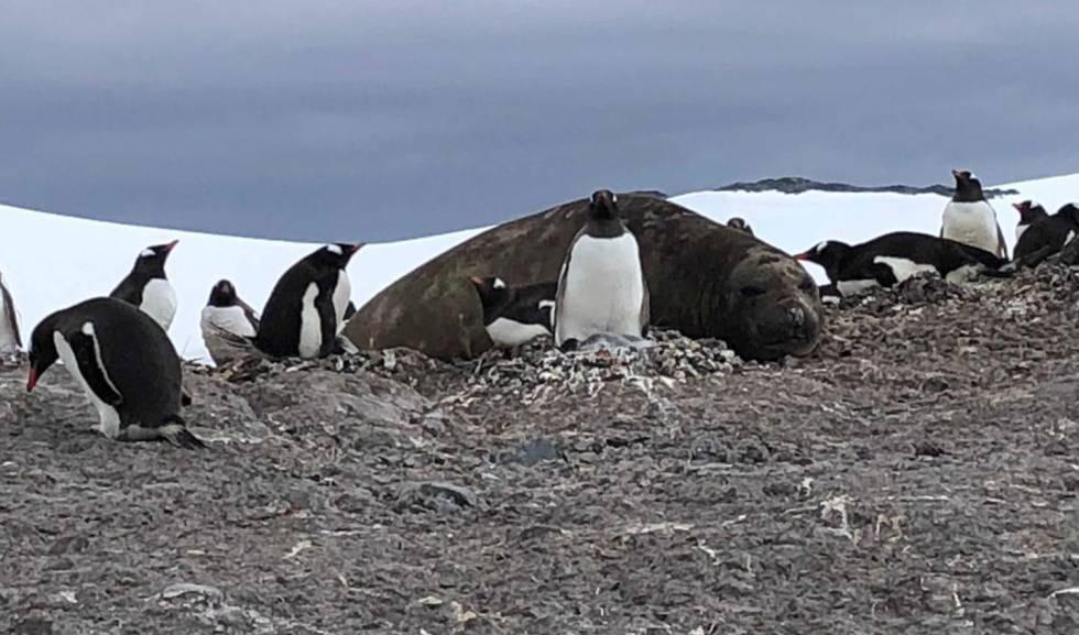 Otra vista de la Bahía Trinity, en la Antártida.