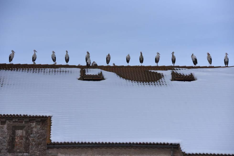 Cigüeñas en el tejado de una iglesia de Barahona, enero 2018.