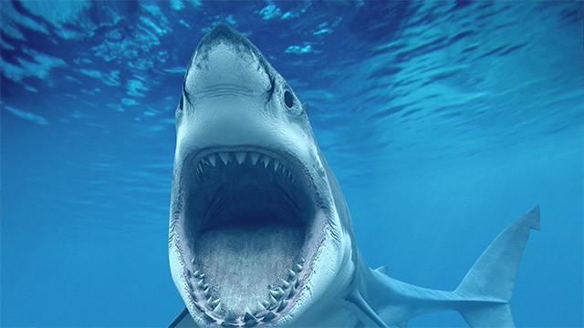 Austrália busca solução rápida para frear ataques de tubarões ...