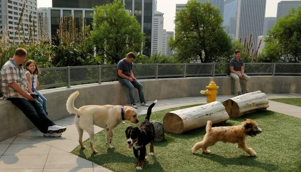 En las oficinas de Amazon los perros van al trabajo y tienen espacios dedicados.
