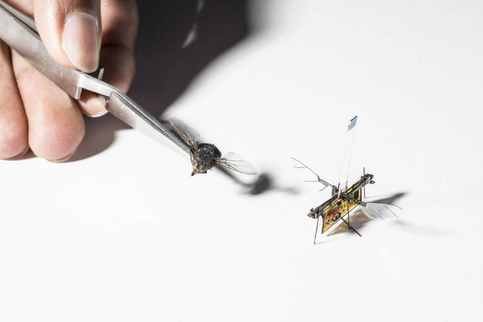 RoboFly es un poco m�s grande que una mosca real.