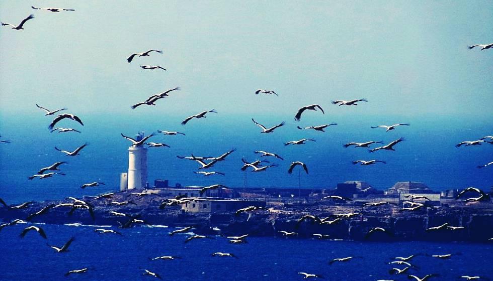 Una bandada de aves sobrevuela Tarifa.