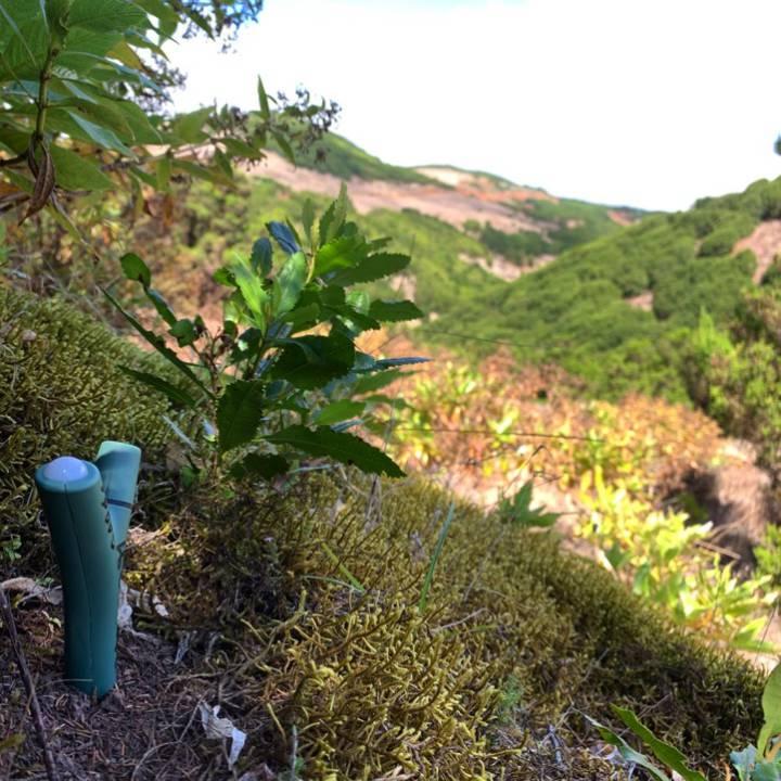 Un sensor en el suelo de Canarias (España).