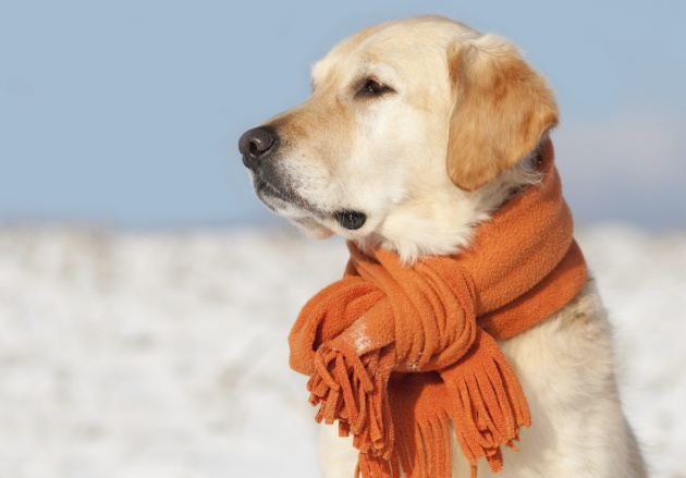 Ola De Frío Las 21 Frases Sobre El Frío Que Más Vas A Oír Verne