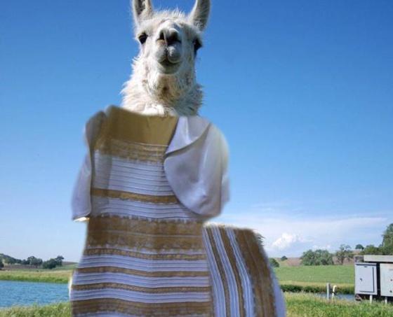Reto del vestido blanco con dorado