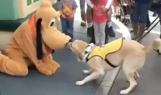 Se Cuando Su Disfraza La De Perro Dueño Juguete Un Reacción 0OPwkn