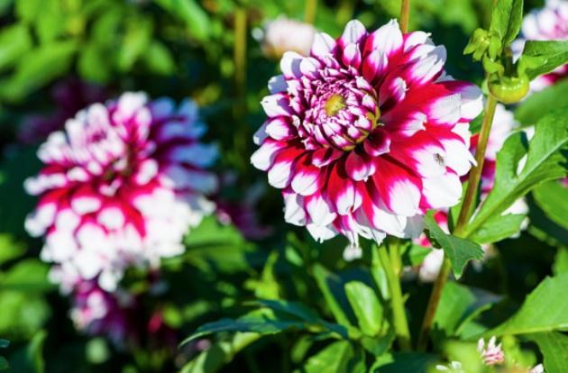 Llega la primavera reconoces estas flores verne el pa s for Plantas para jardin japones