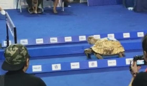 Moraleja de la tortuga y la liebre yahoo dating
